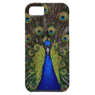 Bright girly pretty peacock bird nature animal tough iPhone 5 case