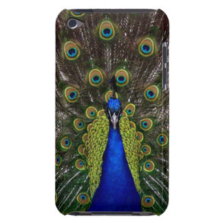 Bright girly pretty peacock bird nature photograph Case-Mate iPod touch case