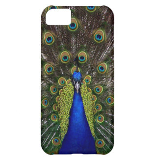 Bright Girly Pretty Peafowl Bird Nature Photo iPhone 5C Case