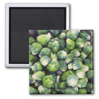 Bright Green Fresh Brussels Sprouts Square Magnet