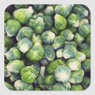 Bright Green Fresh Brussels Sprouts Square Sticker
