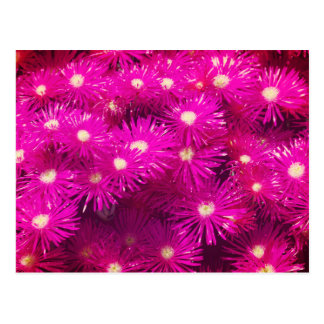 Bright Hot Fuscia Pink floral design Postcard
