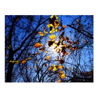 Bright leaves at 8-mile creek postcard
