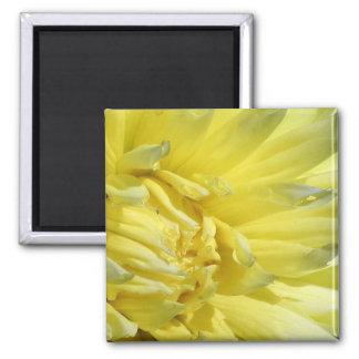 Bright, Lemon Yellow Dahlia Magnet