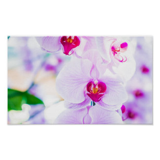 Bright Macro Purple Orchid Spring Photography Poster