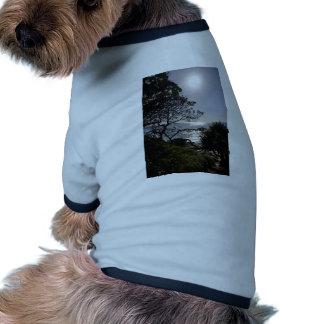 Bright Morning Light Pet Clothing