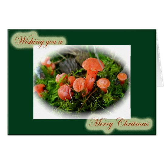 Bright Mushrooms Christmas Card