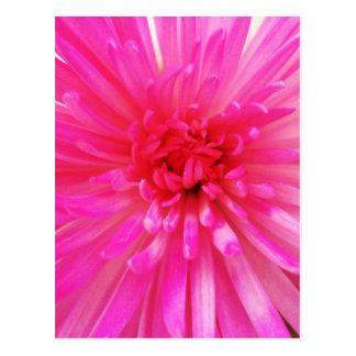 Bright Neon Pink Flower Bloom Postcard