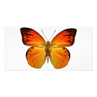 Bright Orange Butterfly Customized Photo Card