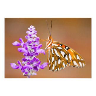 Bright Orange Gulf Fritillary Butterfly Art Photo