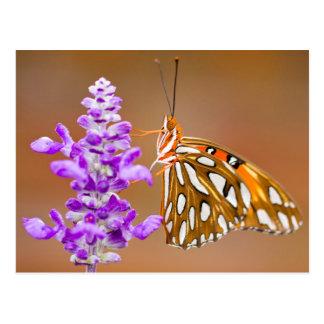Bright Orange Gulf Fritillary Butterfly Postcard