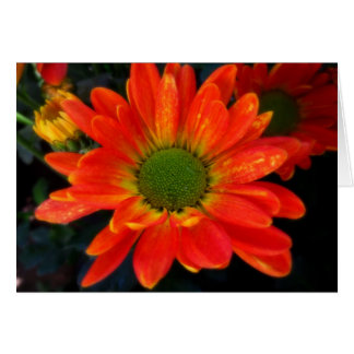 Bright Orange Mums Note Card