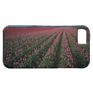 Bright pink and red tulips glow under dark iPhone 5 case