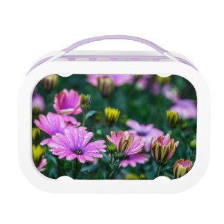 Bright Pink Daisy Flowers Lunch Box