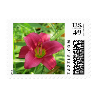 Bright Pink Day lily Flower Small Postage Stamps