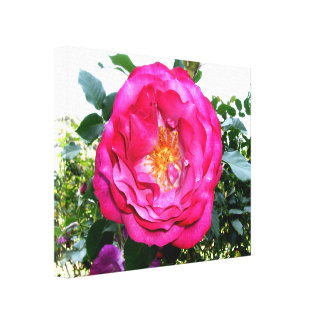 Bright Pink Rose Stretched Canvas Prints