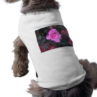 Bright Pink Rose Gifts and Merchandise Dog Clothes