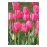 Bright Pink Tulip Garden Greeting Card