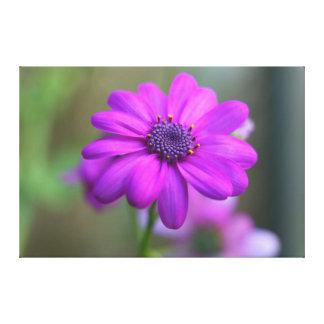 Bright Pink Violet Flower Canvas Print