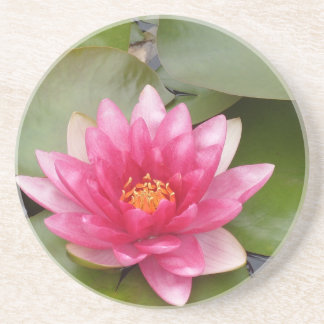 Bright Pink Water Lily Flower Drink Coasters