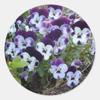 Bright_Purple_And_White_Pansies,_ Round Sticker