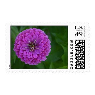 Bright purple zinnia flower wedding postage stamps