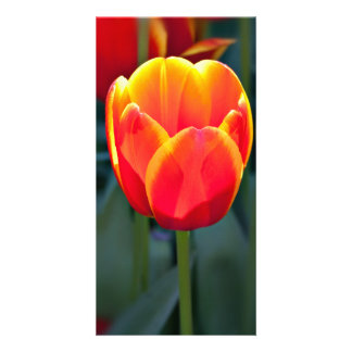 Bright red and yellow tulip bloom on green custom photo card