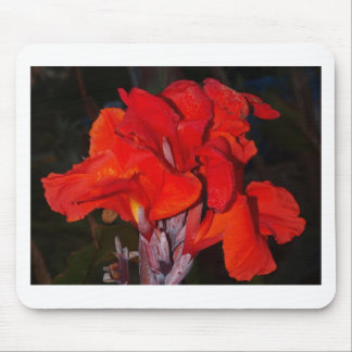Bright red canna lily mouse pad