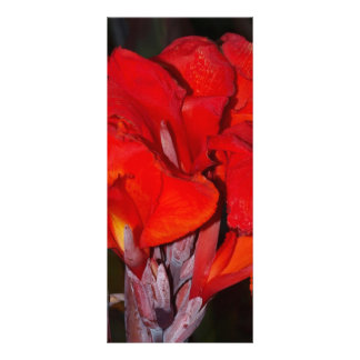Bright Red Canna Lily Customized Rack Card