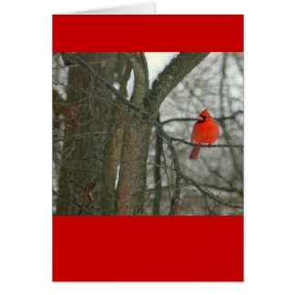 Bright Red Cardinal On Tree Branch (photog) Note Card