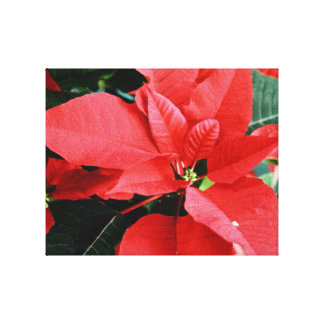 Bright Red Christmas Poinsettia Stretched Canvas Print