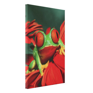 Bright Red-Eyed Frog Canvas Print