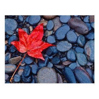 Bright Red Fall Leaf Postcard