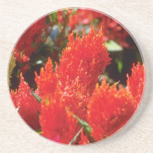 Bright red flowers flowers beverage coasters