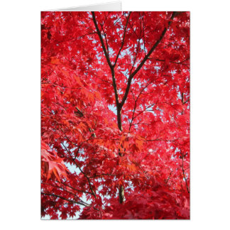 Bright Red Japanese Maple Tree Card