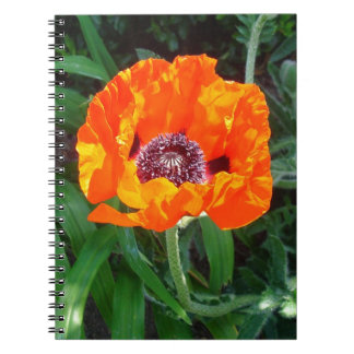 Bright red poppy spiral note books