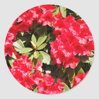 Bright Red Rhododendron Flowers Stickers