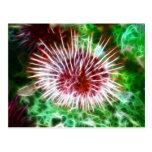 Bright Red Sea Urchin Postcard