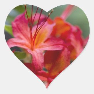 Bright Red Spring Blooming Azaleas Pentanthera Sticker