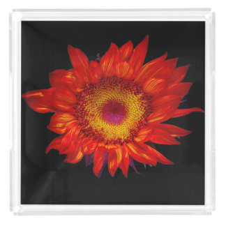 Bright Red Sunflower Black Acrylic Perfume Tray