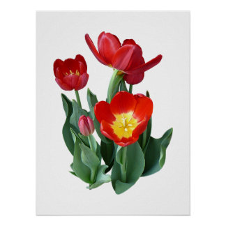 Bright Red Tulips Posters
