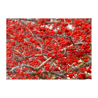 Bright Red Winterberries Holly Tree Berries Acrylic Wall Art