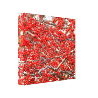 Bright Red Winterberries Holly Tree Berries Canvas Print