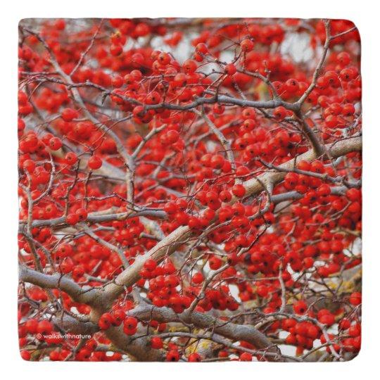 Bright Red Winterberries Holly Tree Berries Trivet