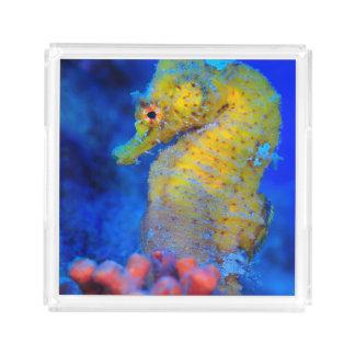 Bright Seahorse | Hippocampus Acrylic Tray