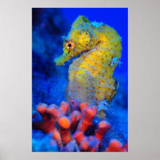 Bright Seahorse | Hippocampus Poster
