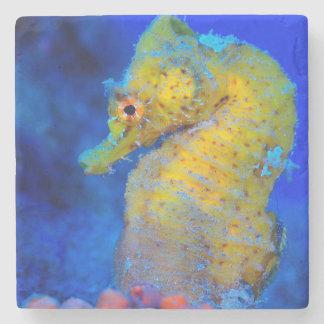 Bright Seahorse | Hippocampus Stone Coaster