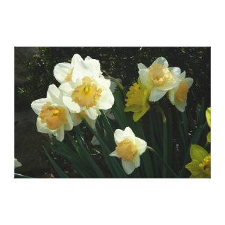 Bright Spring Daffodil Canvas Print