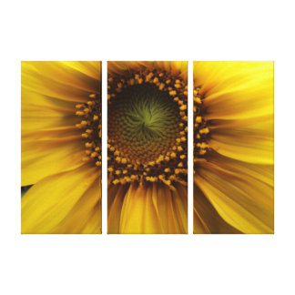Bright Sun Gallery Wrapped Canvas