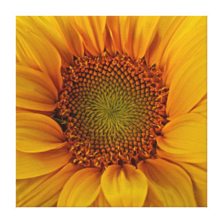 Bright Sunflower Stretched Canvas Prints